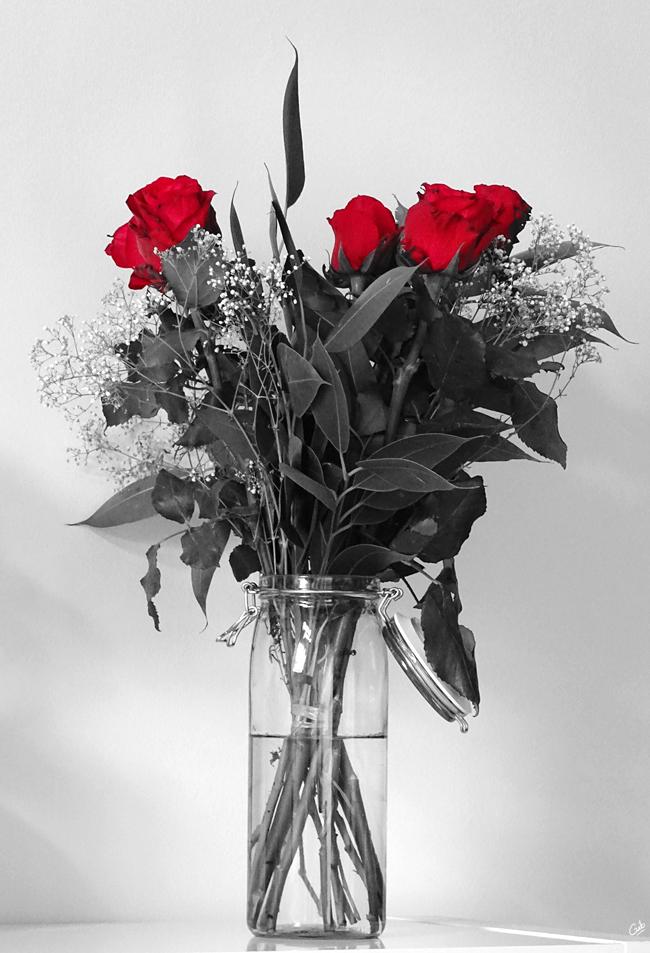 bouquet de fleurs noir et blanc rouge rose roses rouge photo photographie