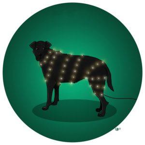 chien mignon illuminations noël