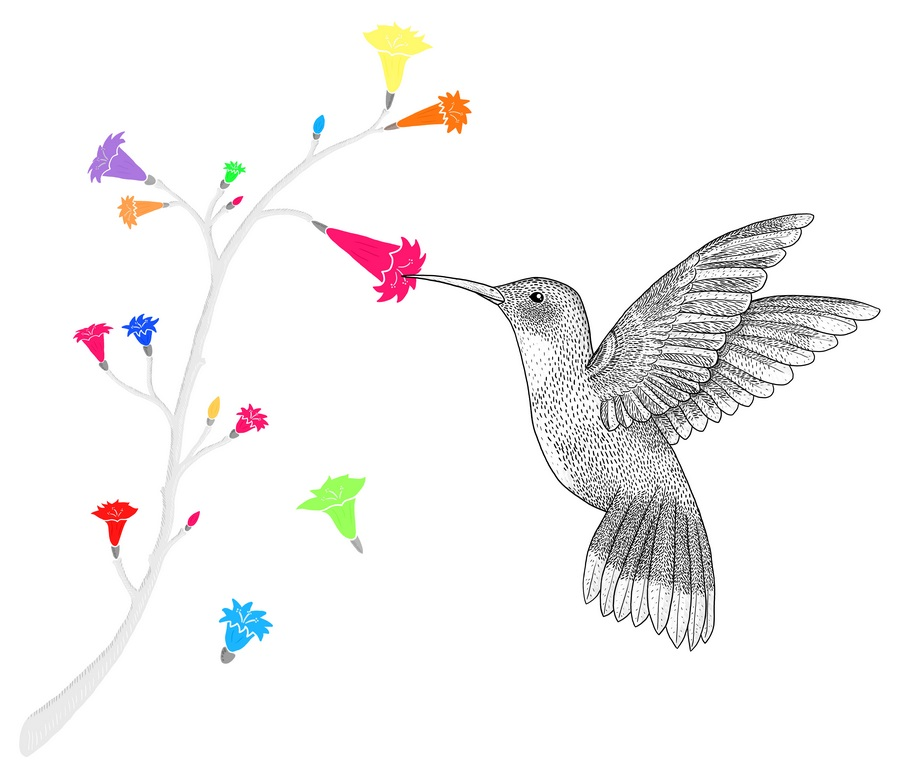 colibri illustration hummingbird