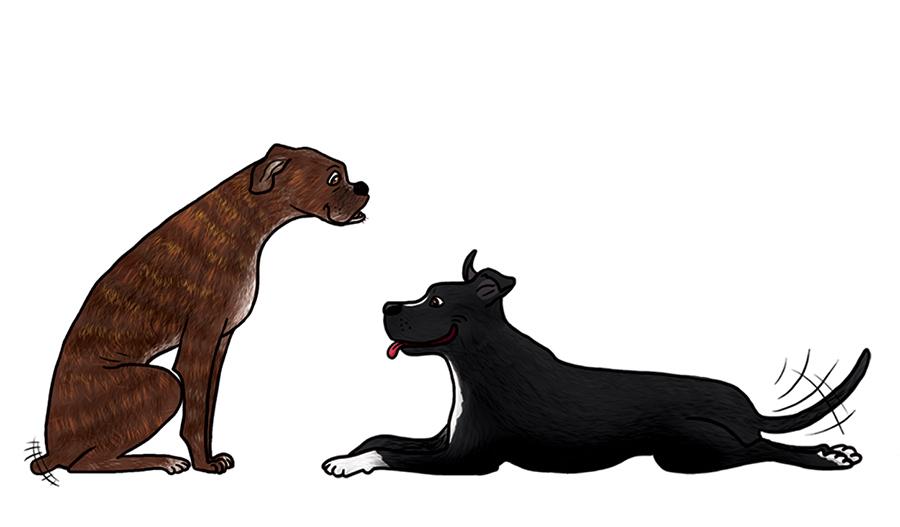 bande dessinée personnage faire part de naissance bébé mignon toutous chiens boxer staff staffordshire américain bull terrier